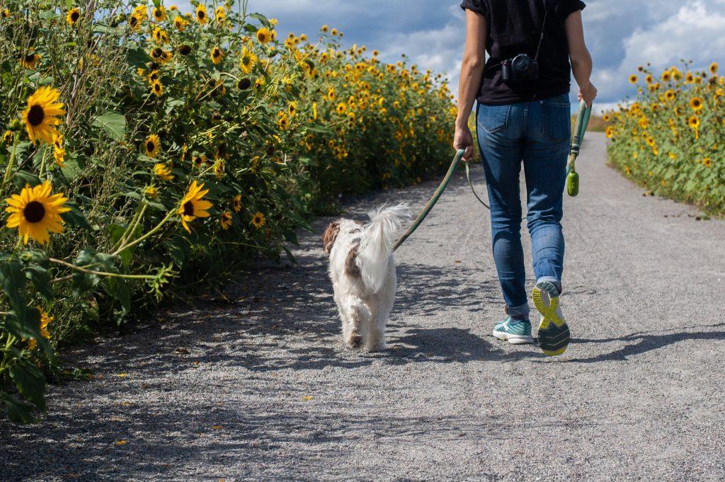 arrondir ses fins de mois promener un chien